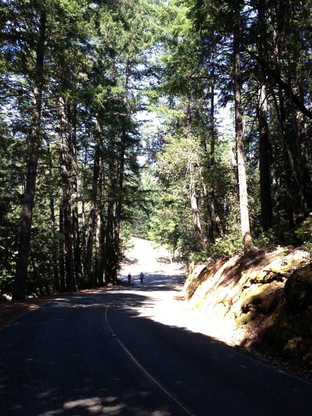 The road to the Mountain Theatre atop Mt. Tamalpais