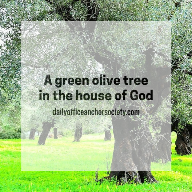 A green olive treein the house of God